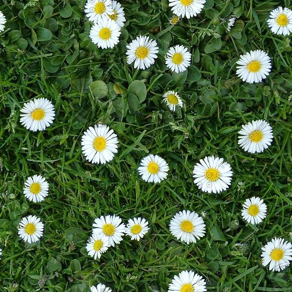 G350 daisies grass flowers texture