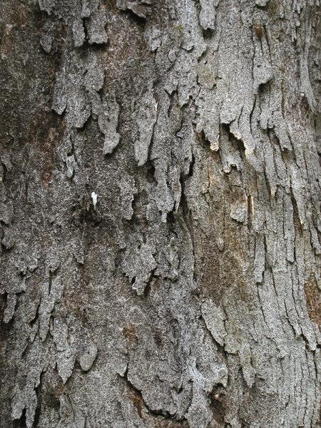 wood0019.jpg