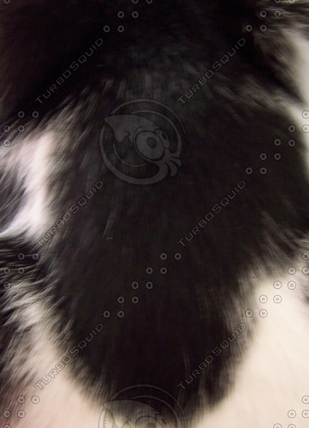 Black and White Animal Fur