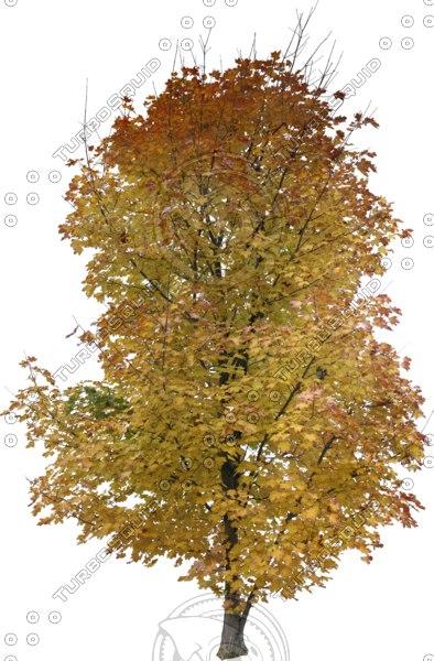 tree68