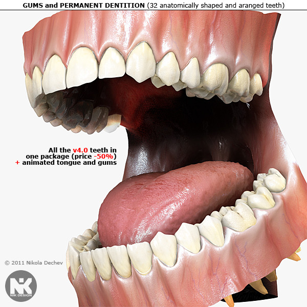 3d v4 0 teeth gums model - Human Gums, Tongue and Teeth v4.0... by Nikola Dechev