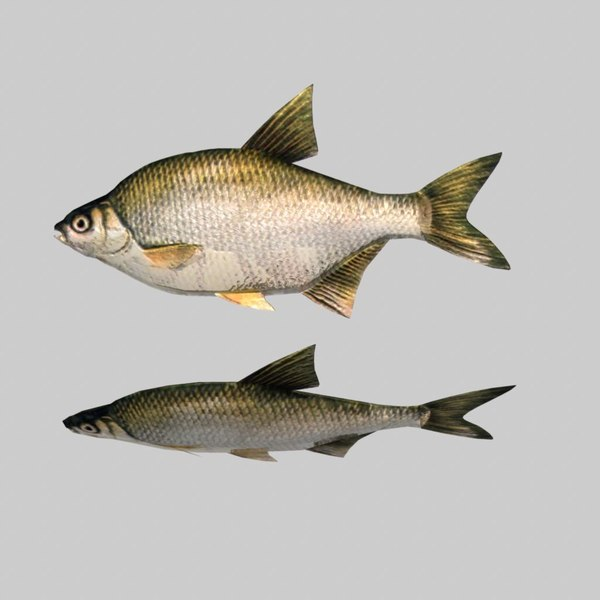 Fish Silver Bream