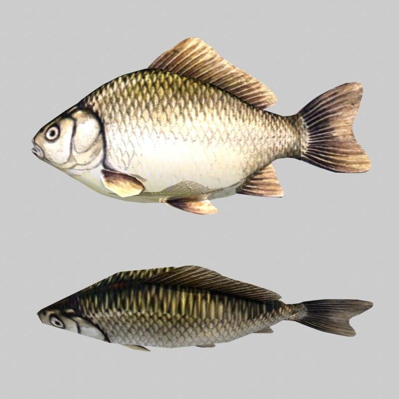 fish.6.jpg