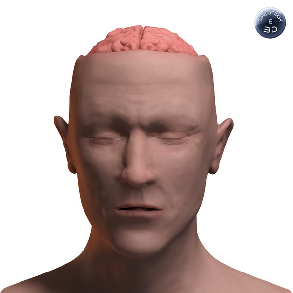 skull brain 3d lwo - Brain and Head... by PolyTron