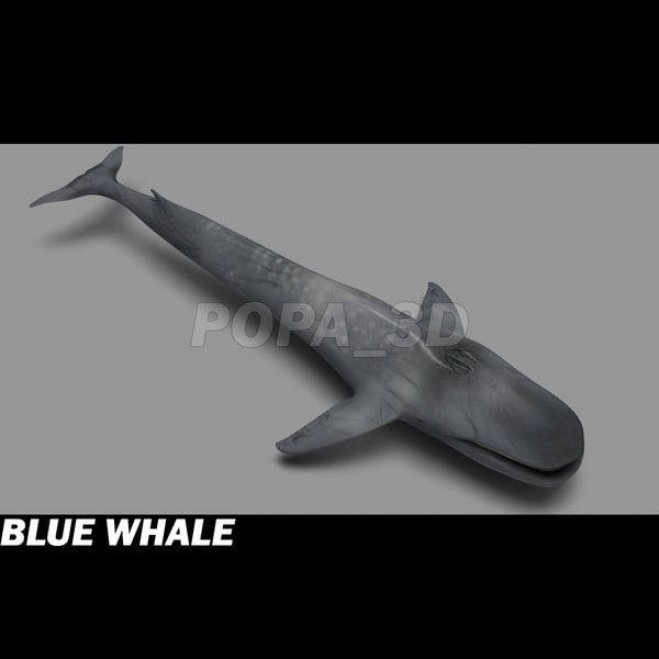 3ds max blue whale - Blue Whale... by POPA_3D