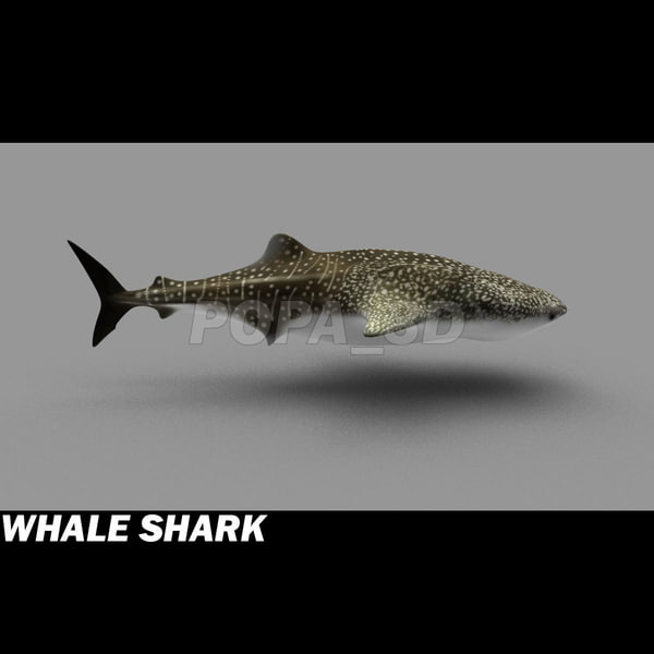 shark sea animals 3d max - Sea Animals Collection... by POPA_3D
