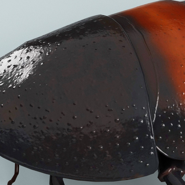 3d model madagascar hissing cockroach - Madagascar Hissing Cockroach... by 3d_molier