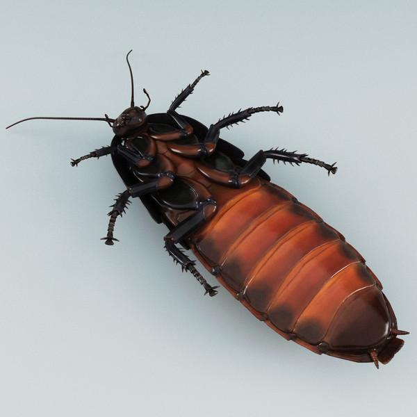 Cockroach porn