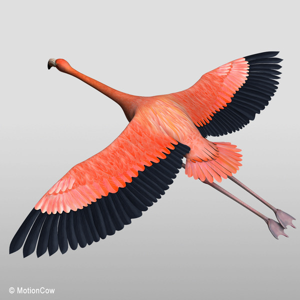 maya realistic flying flamingo - Flamingo ( Flying )... by MotionCow