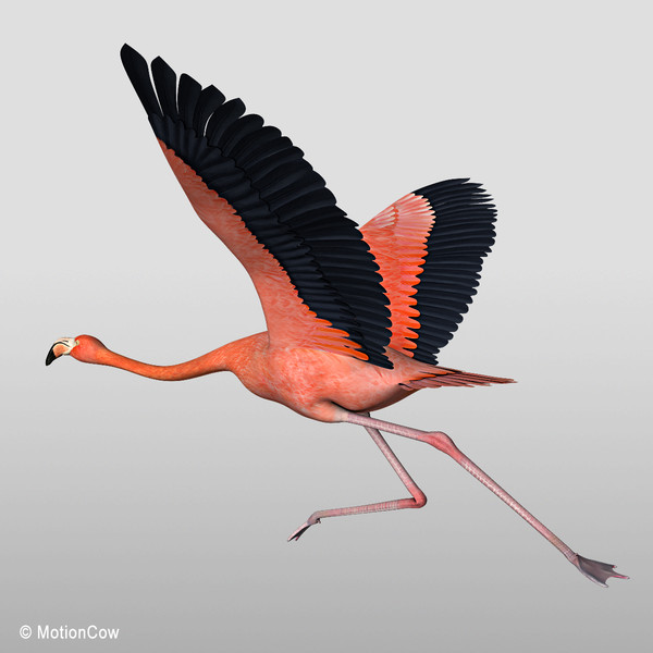 flying flamingoes ii by - photo #44