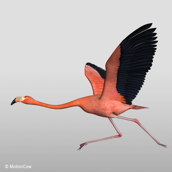 flying flamingoes ii by - photo #9
