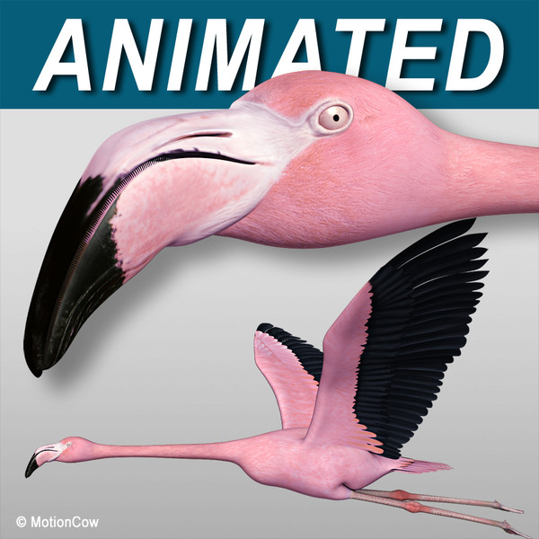 3d realistic flying pink flamingo model
