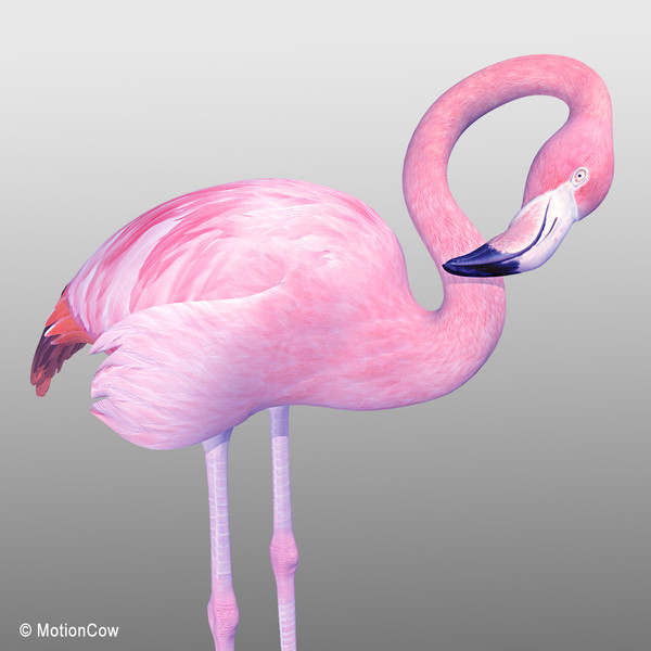 realistic pink flamingo 3d model - Flamingo Pink ( Folded Wings)... by MotionCow