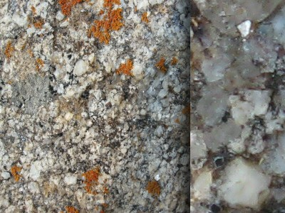 Demo - Lichen on Rock_1_7