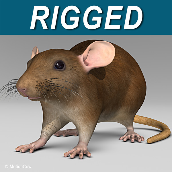 3d model brown rat