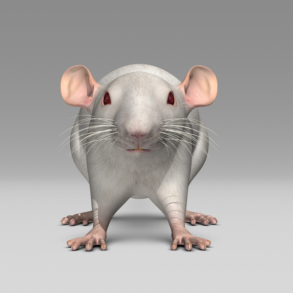 3ds max white rat - Rat ( White )... by MotionCow
