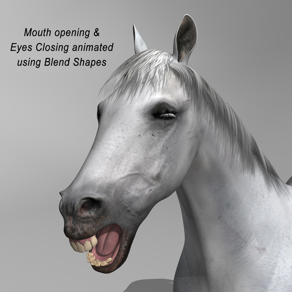 3d white looped galloping - Horse ( White )... by MotionCow