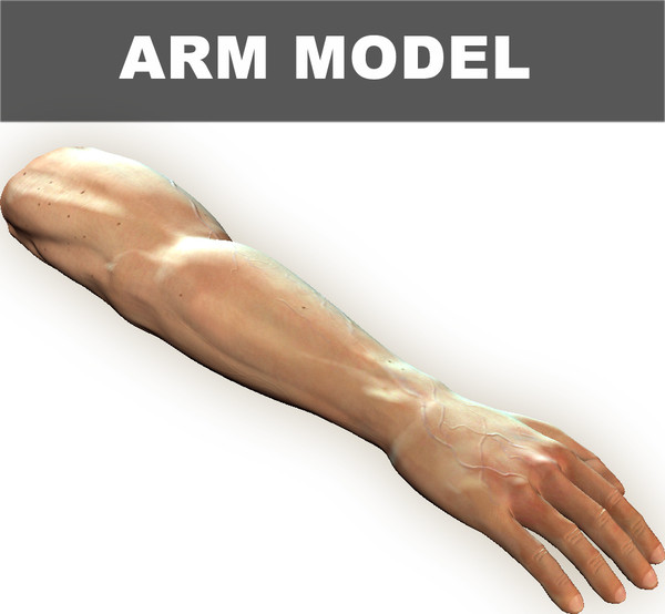 max arm - Arm Model... by VIS3D