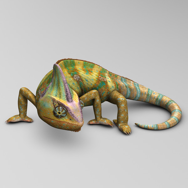 chameleon color 3d max - Chameleon ( Color )... by MotionCow