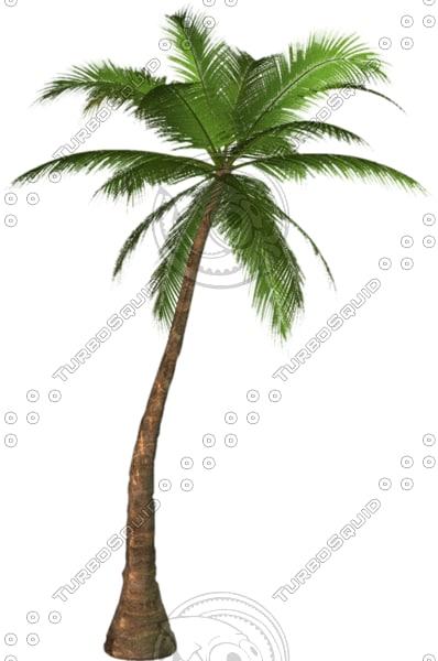Palm tree 01