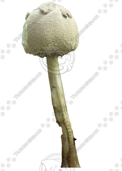 Mushroom_4