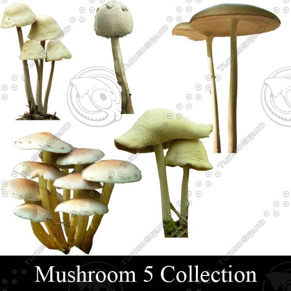 Mushroom_5_stock