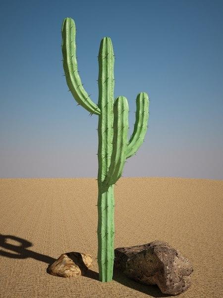 maya mytillocactus cactus