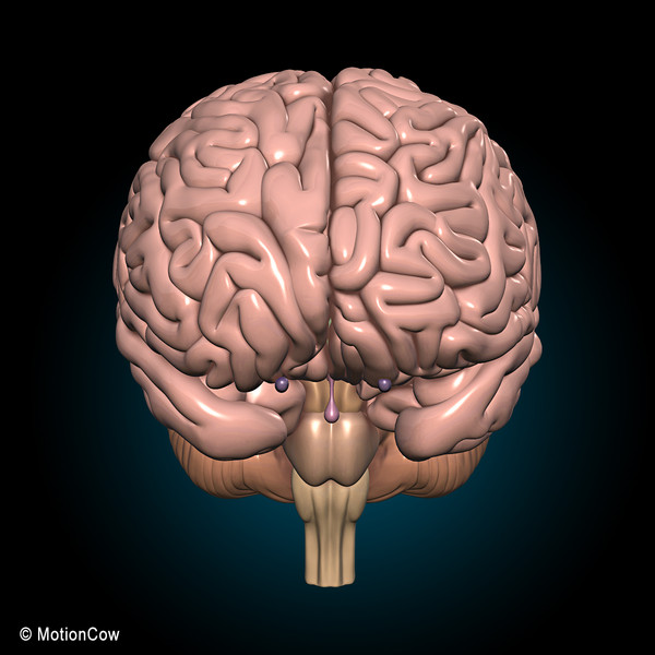 max human anatomy pumping heart - Anatomy & Brain... by MotionCow