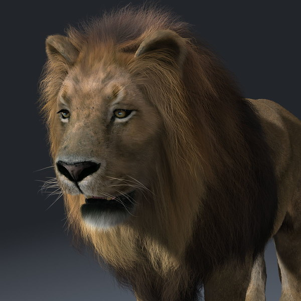 3d lion fur - Lion (2) (FUR)... by Massimo Righi