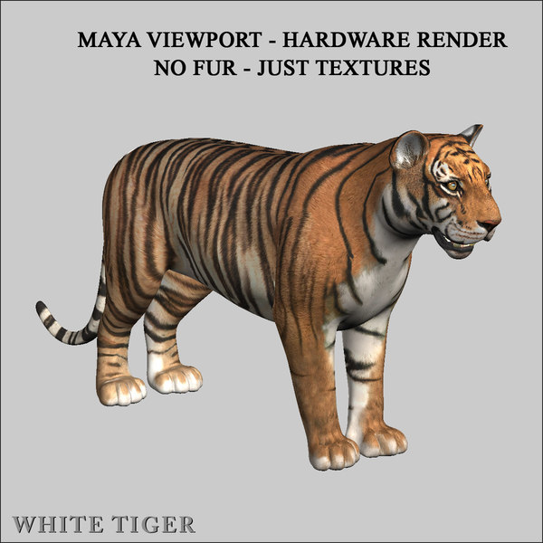 tigers fur 3d model - Tigers (FUR) (ANIMATED... by Massimo Righi