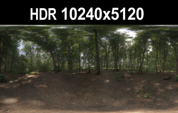 HDR 116 Forest