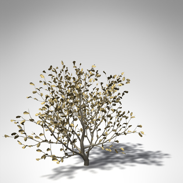 african boxwood africa 3d model - XfrogPlants African Boxwood... by xfrog