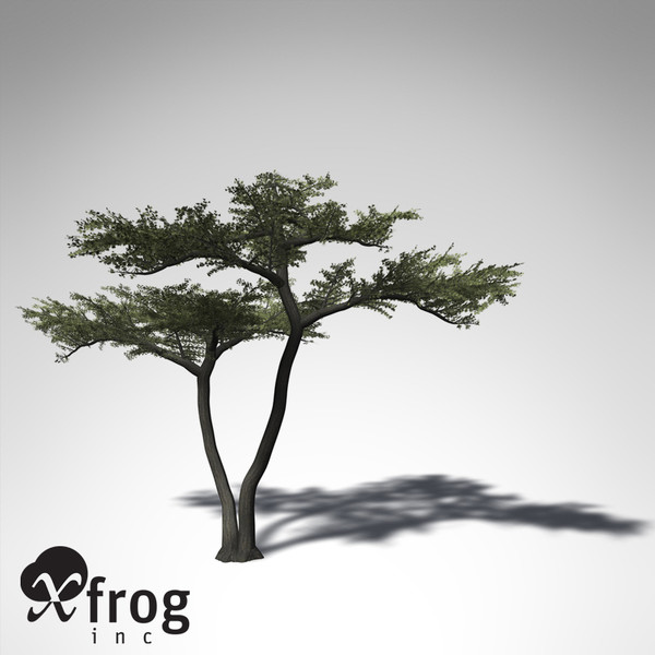 3d xfrogplants umbrella acacia tree - XfrogPlants Umbrella Acacia... by xfrog