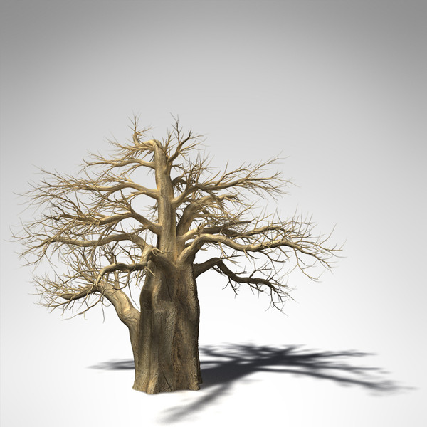 baobab tree 3d model - XfrogPlants Baobab... by xfrog