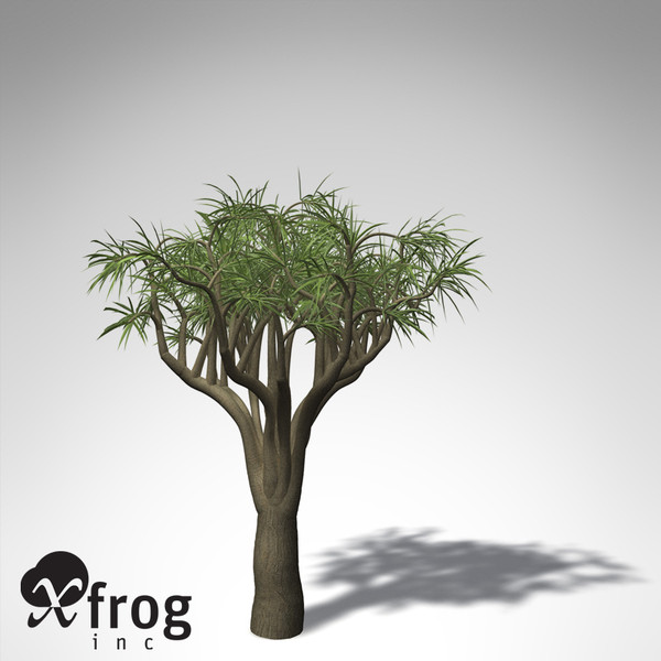 3d model of xfrogplants tree aloe - XfrogPlants Tree Aloe... by xfrog