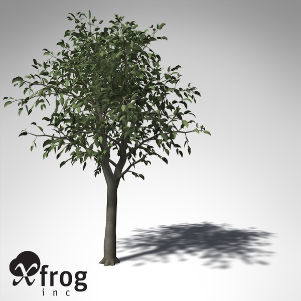 3d model xfrogplants river wild pear - XfrogPlants River Wild Pear... by xfrog