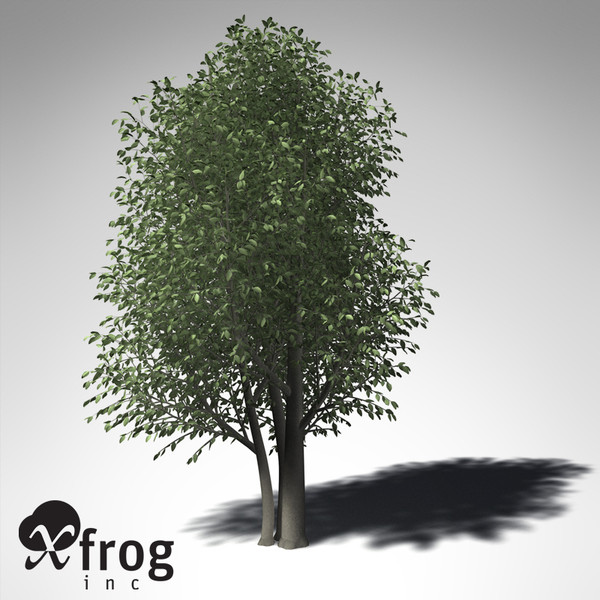 3d xfrogplants wild peach tree - XfrogPlants Wild Peach... by xfrog