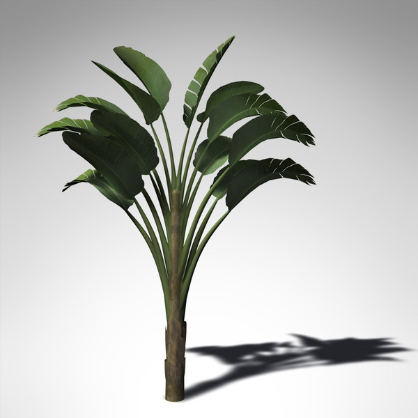 3ds xfrogplants white bird paradise - XfrogPlants White Bird of Paradise... by xfrog