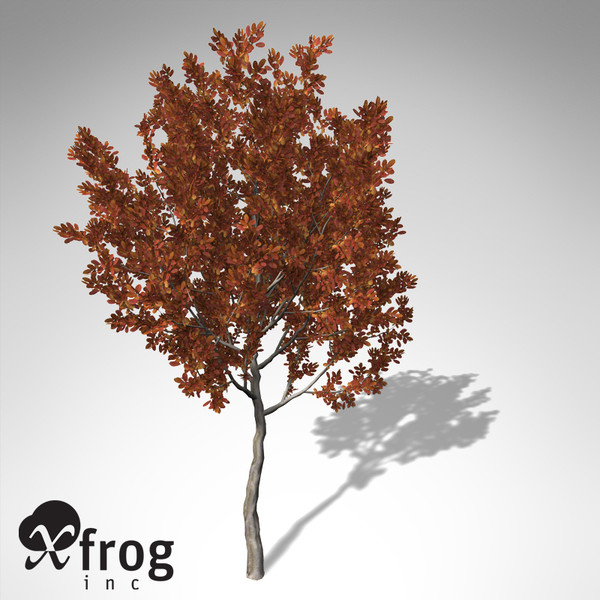 3d model xfrogplants autumn crape myrtle - XfrogPlants Autumn Crape Myrtle... by xfrog