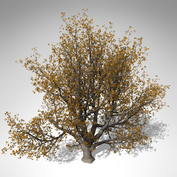 xfrogplants autumn english oak 3d max - XfrogPlants Autumn English Oak... by xfrog