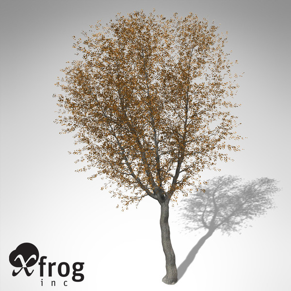 3d xfrogplants autumn norway maple model - XfrogPlants Autumn Norway Maple... by xfrog
