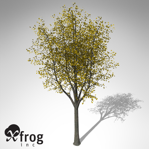 xfrogplants autumn sycamore maple 3d model - XfrogPlants Autumn Sycamore Maple... by xfrog