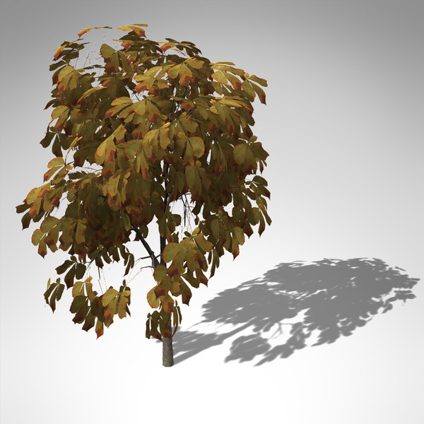 3d model xfrogplants autumn horse chestnut - XfrogPlants Autumn Horse Chestnut... by xfrog