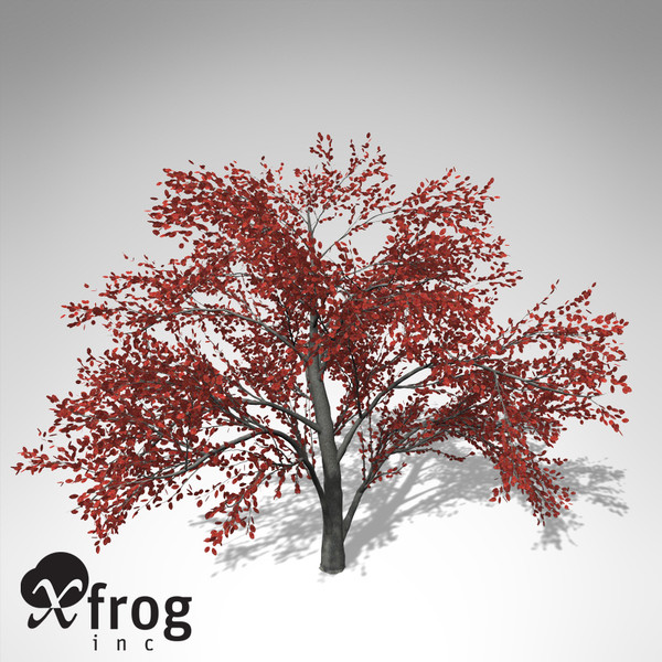 3ds xfrogplants autumn serviceberry - XfrogPlants Autumn Serviceberry... by xfrog