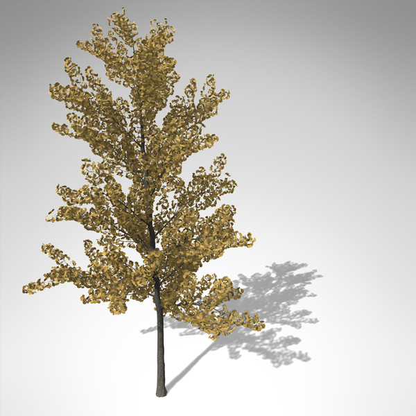 xfrogplants autumn ginkgo 3d ma - XfrogPlants Autumn Ginkgo... by xfrog