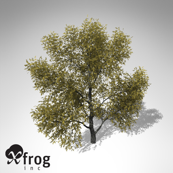 3ds max xfrogplants autumn honey locust - XfrogPlants Autumn Honey Locust... by xfrog