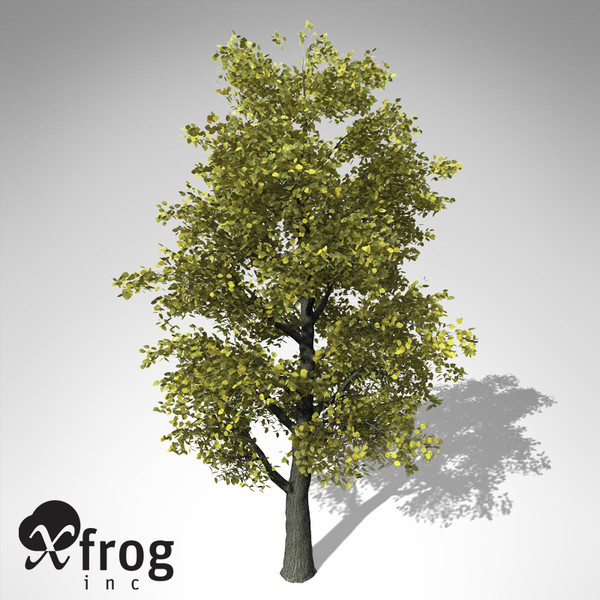 xfrogplants autumn littleleaf linden 3d 3ds - XfrogPlants Autumn Littleleaf Linden... by xfrog