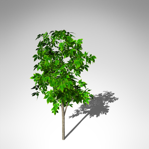 Xfrog Plants - Home | Facebook