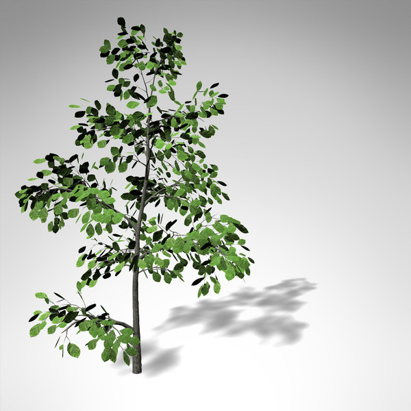 3d model xfrogplants european beech tree - XfrogPlants European Beech... by xfrog