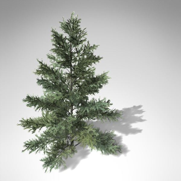 xfrogplants colorado spruce tree 3d lwo - XfrogPlants Colorado Spruce... by xfrog